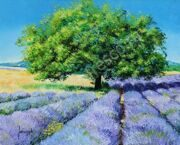 jean-marc-janiaczyk tree-and-lavenders 3264_4048